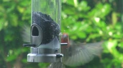 Bird and Feeder 1 Stock Footage