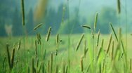 Spider on the web against meadow Stock Footage
