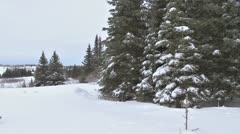 Stock Video Footage of Man Hunting Xmas Tree in Snowy Spruce Forest 3