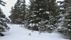 Stock Video Footage of Man Hunting Xmas Tree in Snowy Spruce Forest 2