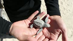 Baby turtle rescue program Stock Footage