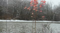 Red Plant in Snowy Landscape - stock footage