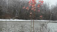 Stock Video Footage of Red Plant in Snowy Landscape