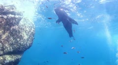 Sea lions mexico diving baja california sur Stock Footage