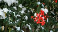 Stock Video Footage of Nandia Bush in Snow
