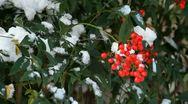 Nandia Bush in Snow Stock Footage