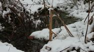 Stock Video Footage of Snowy Stream Close Up