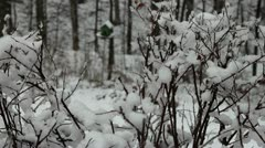 Snowy Branches - stock footage