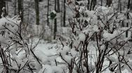 Stock Video Footage of Snowy Branches