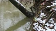 Stock Video Footage of Tree leaning over River
