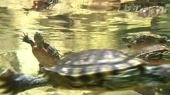 Cute Turtles Swimming 1 Stock Footage