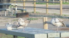 BirdTable Stock Footage