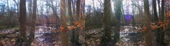3D forest at Mammoth Cave National Park Stock Footage