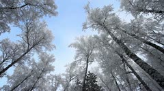 Winter scene 25 Stock Footage