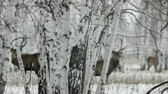 Stock footage herd of deer run through the winter forest Stock Footage