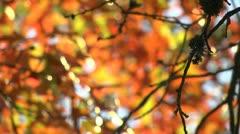 Autumn leaf Stock Footage