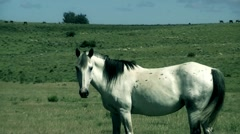 White Horse 01 Stock Footage