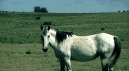 Stock Video Footage of White Horse 01