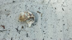 Hermit crab. Stock Footage