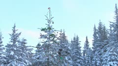 Tilt down Christmas Tree with Presents Stock Footage