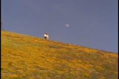 A young couple walk along a hill covered in golden wildflowers Stock Footage