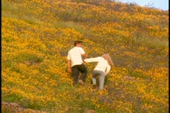 A young couple walk along a hill covered in golden wildflowers - stock footage