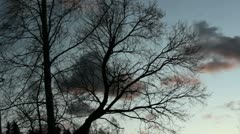 Tree and fast bygoing clouds Stock Footage