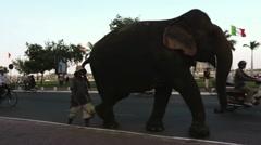 Elephant walking on a street in Phnom Penh, Cambodia Stock Footage