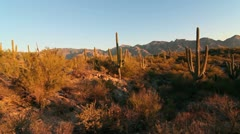 Arizona Saguaro Crane Shot Scenic Stock Footage