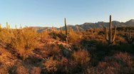 Stock Video Footage of Arizona Saguaro Crane Shot Scenic