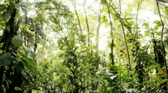 Sun Shining Through a Jungle Stock Footage