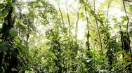 Stock Video Footage of Sun Shining Through a Jungle