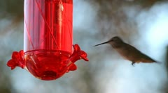 Hummingbird Nectar Stock Footage
