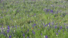 Field of Wild Flowers Stock Footage