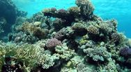 Stock Video Footage of Underwater view