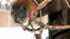 Horse in Winter in St. Moritz Stock Footage