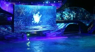 Stock Video Footage of Killer whale Christmas show at Seaworld Florida