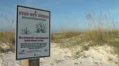 Beach Dune Restoration Stock Footage