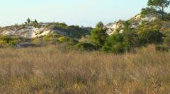Florida Dunes Stock Footage