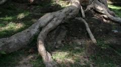 Ancient Temple (Angkor) - Slow pan from tree to Bayon Bridge Stock Footage