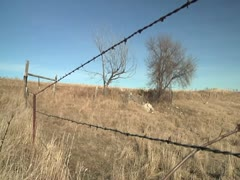 Fence row & old trees - stock footage