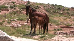 Colt and mare Stock Footage
