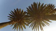 Stock Video Footage of Two palms.mp4