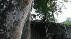 Ancient Temple (Angkor) - Tilt Down from Spidery Tree and Ancient Wall Stock Footage