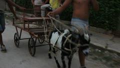 Goat pulling cart in Cuba Stock Footage
