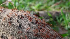 Ants crawling on stem 1 Stock Footage