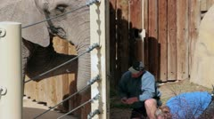 Zoo Keepers Taking Care of Elephant Stock Footage