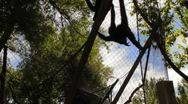 Spider Monkey Haging by Tail Stock Footage