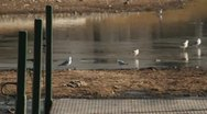 Birds at a pond Stock Footage