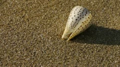 Conch on sandy beach,wind blow sand Stock Footage